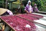 Wanita tani Kulon Progo produksi makanan ringan berbahan umbi