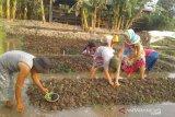 Petani binaan BI NTB memperluas lahan pertanian organik