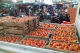 TPID Sulawesi Utara jual tomat Rp8.000/kg