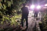 Belasan pohon bambu tumbang di Matur, Jalan Agam-Bukittinggi buka-tutup