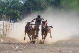 Joki memacu sepasang sapi kerapan saat latihan di Desa Murtajih, Pamekasan, Jawa Timur, Jumat (6/12/2019). Guna menjaga performa selama tidak ada perlombaan, sapi tersebut dirawat dan dipacu dua kali dalam seminggu. Antara Jatim/Saiful Bahri/zk.
