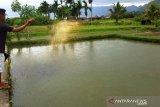 Produksi bibit ikan di Agam berkurang 55,6 juta ekor