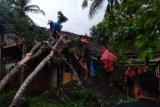 Angin kencang akibatkan belasan pohon tumbang di Magelang