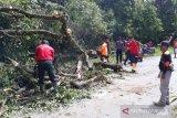 Kelok 22 Tertutup Pohon, Jalan Agam-Bukittinggi Tidak Bisa Dilalui Kendaraan