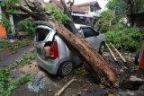 Warga memotong pohon yang menimpa sebuah mobil pasca angin kencang di Kota Kediri, Jawa Timur, Senin (9/12/2019). Bencana angin kencang yang disertai hujan lebat di daerah tersebut mengakibatkan satu orang meninggal dunia, tiga mobil rusak, dan sejumlah bangunan roboh. Antara Jatim/Prasetia Fauzani/zk.