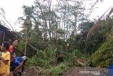 Pepohonan bertumbangan diterjang angin kencang di Batang