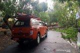 Hujan disertai angin kencang di Solo, sejumlah pohon tumbang