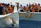 Pol Airud Polda Sulteng lepas puluhan penyu di laut Donggola