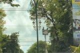 Pohon perindang Jalan Sudirman dirapikan