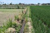 Alih fungsi lahan di Mataram capai 48 hektare