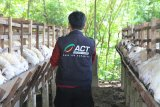Lumbung Ternak Wakaf - ACT perkuat peran wakaf