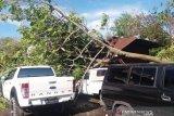 Kamis pagi, pohon bertumbangan di Padang