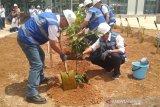 Astra Property perluas konservasi buah langka di Jateng (VIDEO)