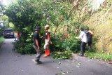 BPBD Agam tebang pohon di Kelok 44 yang mengancam keselamatan pengendara