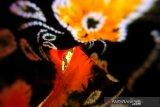 Kain sasirangan di rumah produksi kain Zahra Sasirangan di Sungai Jingah, Banjarmasin, Kalimantan Selatan, Sabtu (14/12/2019). Rumah produksi kain sasirangan tersebut, dalam sehari mampu memproduksi 50 lembar hingga 300 lembar kain sasirangan dengan harga Rp 65 ribu hingga Rp 250 ribu per lembar tergantung jenis kainnya. Foto Antaranews Kalsel/Bayu Pratama S.