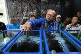 Edhy Prabowo komitmen tingkatkan inovasi produk rumput laut