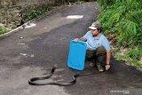 Ahli: penggunaan karbol wangi bisa mencegah ular masuk rumah