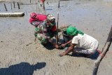 Babinsa Okaba tanam bakau bersama masyarakat guna cegah abrasi