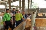 Mentan petakan pengembangan sapi ternak sesuai kondisi daerah