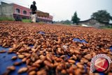 Parigi Moutong targetkan peremajaan kakao sekitar 400 hektare