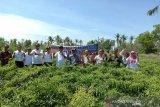 Pesisir selatan Kulon Progo dikembangkan sebagai sentra hortikultura