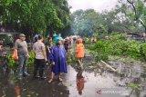 Solo diterjang puting beliung sejumlah pohon tumbang