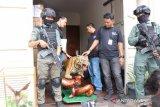 Polisi sita satwa yang diawetkan dari rumah pengemudi Lamborghini