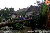 Hujan deras disertai angin kencang landa Jepara,  dua rumah tertimpa pohon tumbang
