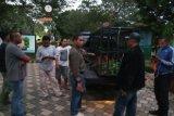 BKSDA Agam Titip Rawat Kijang ke TMSBK Bukittinggi Akibat Hamil