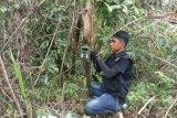 BKSDA pasang kamera  pemantau  Identifikasi harimau yang memangsa ternak warga
