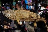 Komunitas pecinta reptil