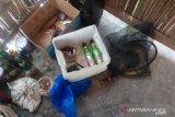 Polisi gagalkan aksi pengeboman ikan di Laut Flores