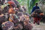 Harga minyak sawit di Jambi turun