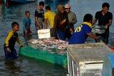 Harga ikan naik di Takalar