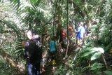 Bunga Rafflesia terbesar  di dunia mulai dikunjungi wisatawan