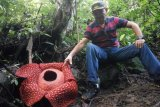 Here are some areas in West Sumatra where rafflesia flowers are found