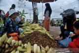 Penjual jagung musiman tahun baru