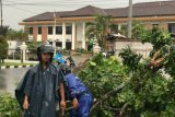 Angin kencang tumbangkan puluhan pohon di Banyumas