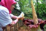Kebun Raya Bogor tetap jaga fungsi riset dan konservasi sejak 1817