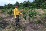 Desa eduwisata pertanian holtikultura di Kapuas mulai sukses