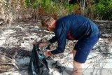 Wisatawan kapal pesiar MV Coral Adventurer bersihkan sampah di Raja Ampat
