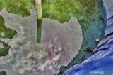 Ikan aligator gigit balita di kolam lapas