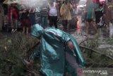 Hujan deras disertai angin kencang, dua orang tewas tertimpa pohon tumbang