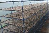 Produksi ikan teri di Hadakewa terhenti akibat cuaca buruk