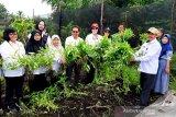 Tumbuhkan semangat bertani generasi muda di Kalteng melalui 'Tani Mas'