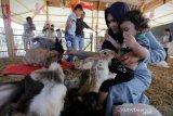 Warga membawa anak-anak memberi makan kelinci di taman wisata kelinci, Ulee Lheu, Banda Aceh, Aceh, Rabu (8/1/2020). Selain menjadi objek wisata, taman yang memiliki koleksi berbagai jenis kelinci menjadi tempat edukasi satwa bagi anak-anak usia dini. Antara Aceh/Irwansyah Putra.