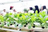 Unsur pendidikan di Kalteng antusias laksanakan pertanian masuk sekolah