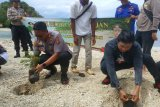 Polres Lampung Selatan tanam pohon di pesisir pantai Pulau Mengkudu
