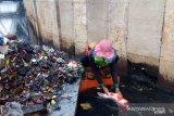 Ikan koi ditemukan saat petugas bersih-bersih sampah sisa banjir