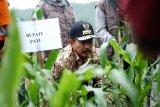 Petani Pati kantongi izin pemanfaatan hutan seluas 1.265 hektare